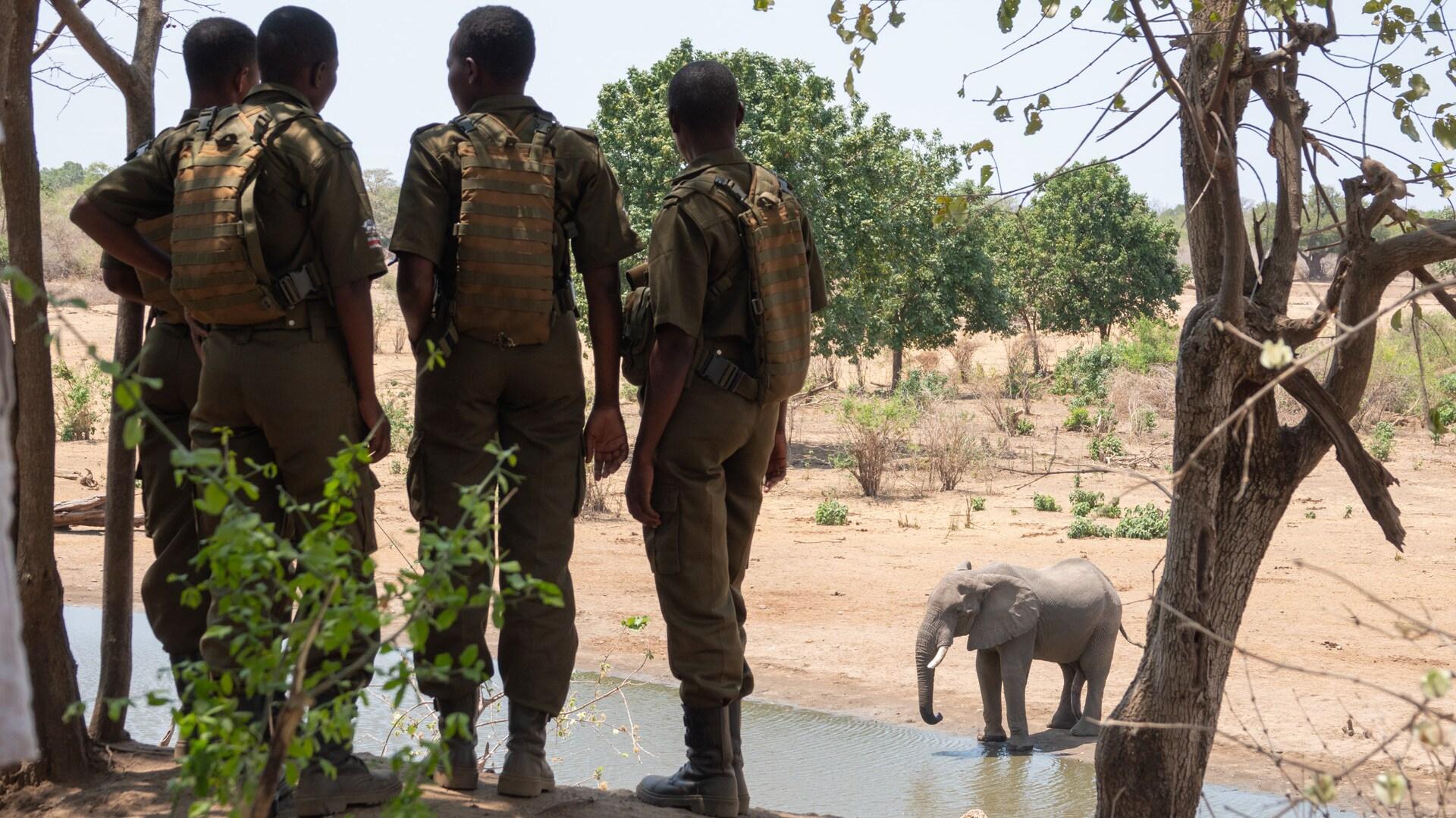 Zimbabwe - Akashinga Rangers with elephant at watering hole. (Kim Butts)