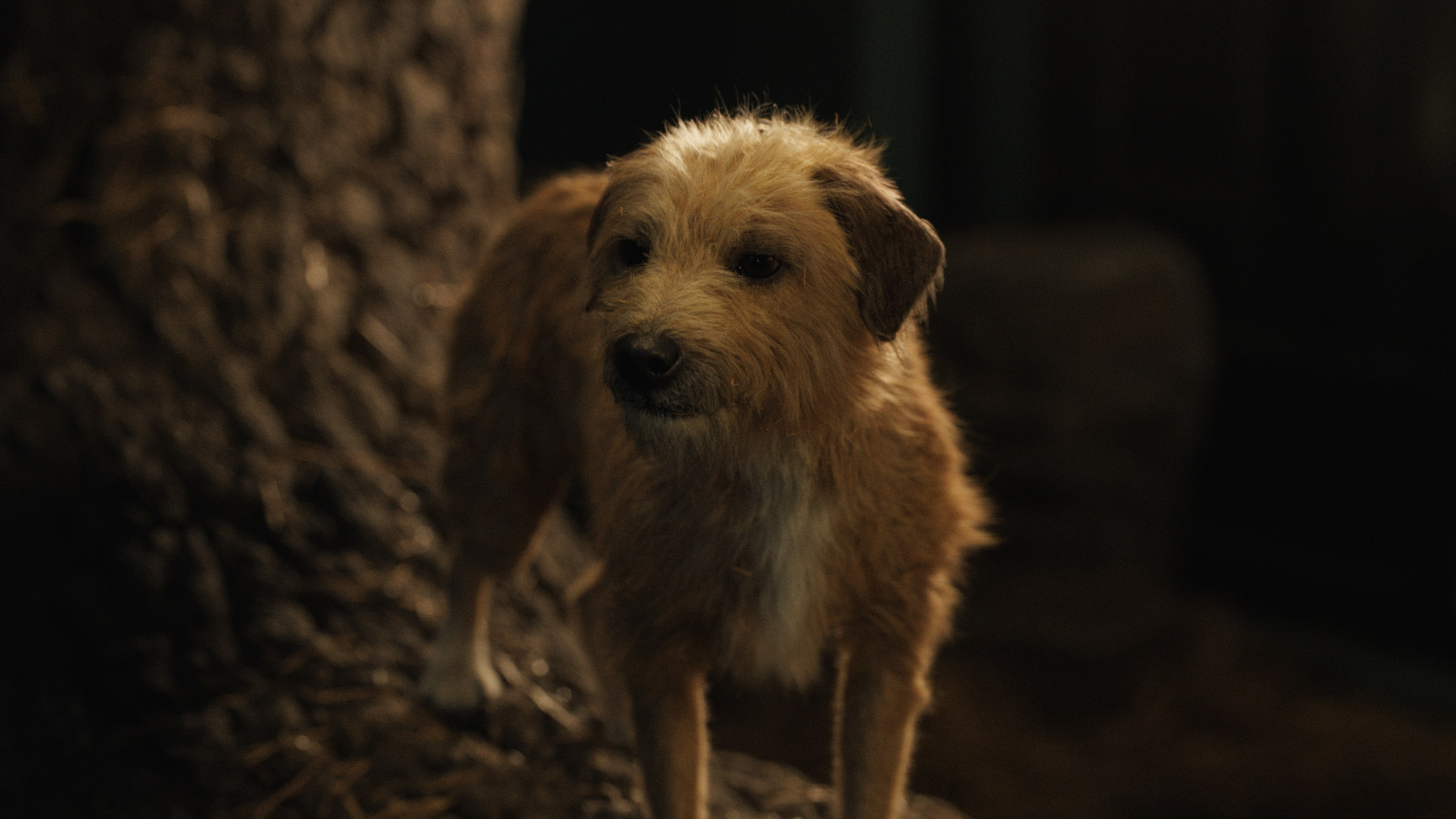 Bob the dog (voiced by Danny DeVito) in Disney's THE ONE AND ONLY IVAN, based on the award-winning book by Katherine Applegate and directed by Thea Sharrock. Photo courtesy of Disney. © 2020 Disney Enterprises, Inc. All Rights Reserved.