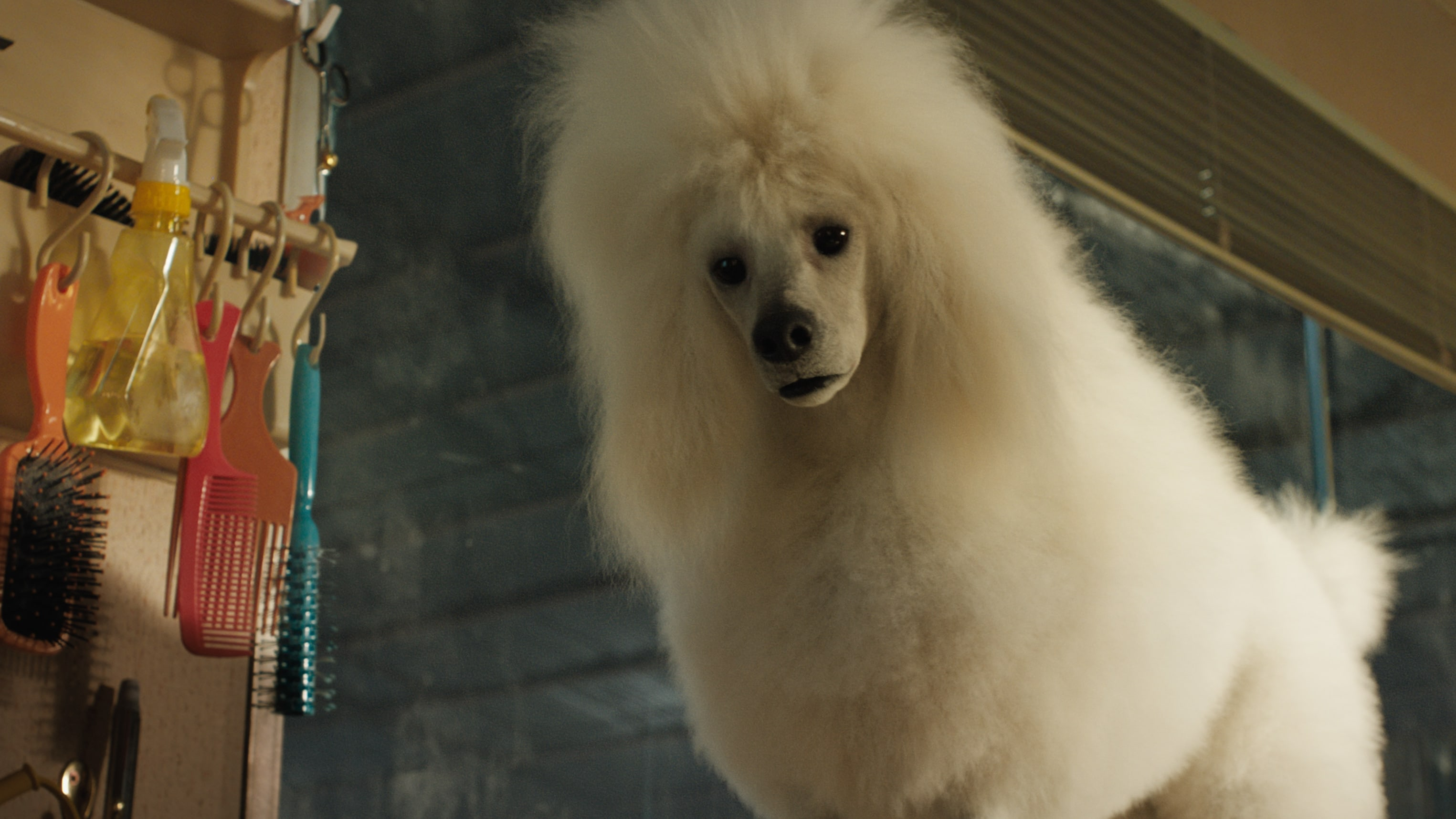 Snickers (voiced by Helen Mirren) in Disney's THE ONE AND ONLY IVAN, based on the award-winning book by Katherine Applegate and directed by Thea Sharrock. Photo courtesy of Disney. © 2020 Disney Enterprises, Inc. All Rights Reserved.