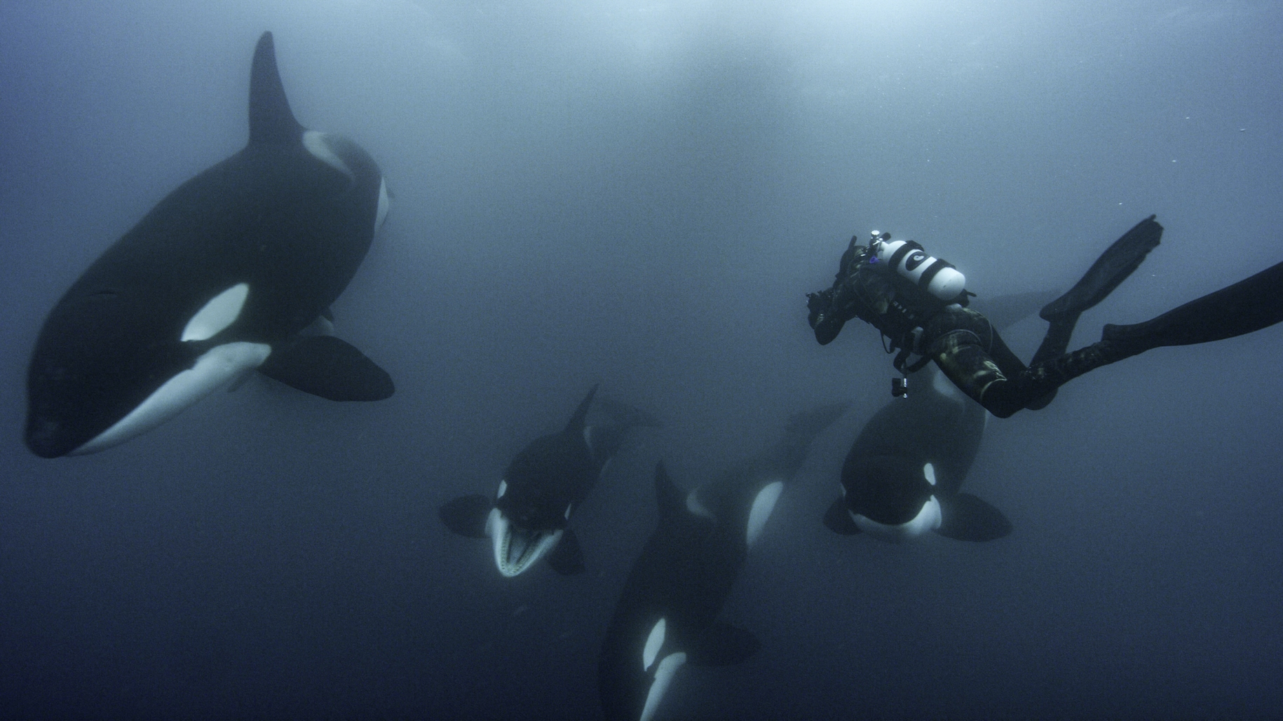 National Geographic photographer Brian Skerry documents a special orca society off the north island of New Zealand. (National Geographic for Disney+/Kina Scollay)