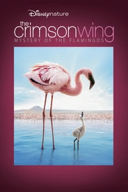 Disneynature: The Crimson Wing: Mystery Of The Flamingos