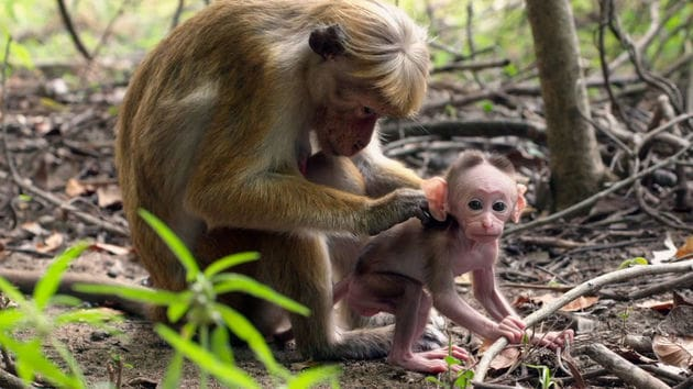 A Special Thank You From Disneynature - Monkey Kingdom
