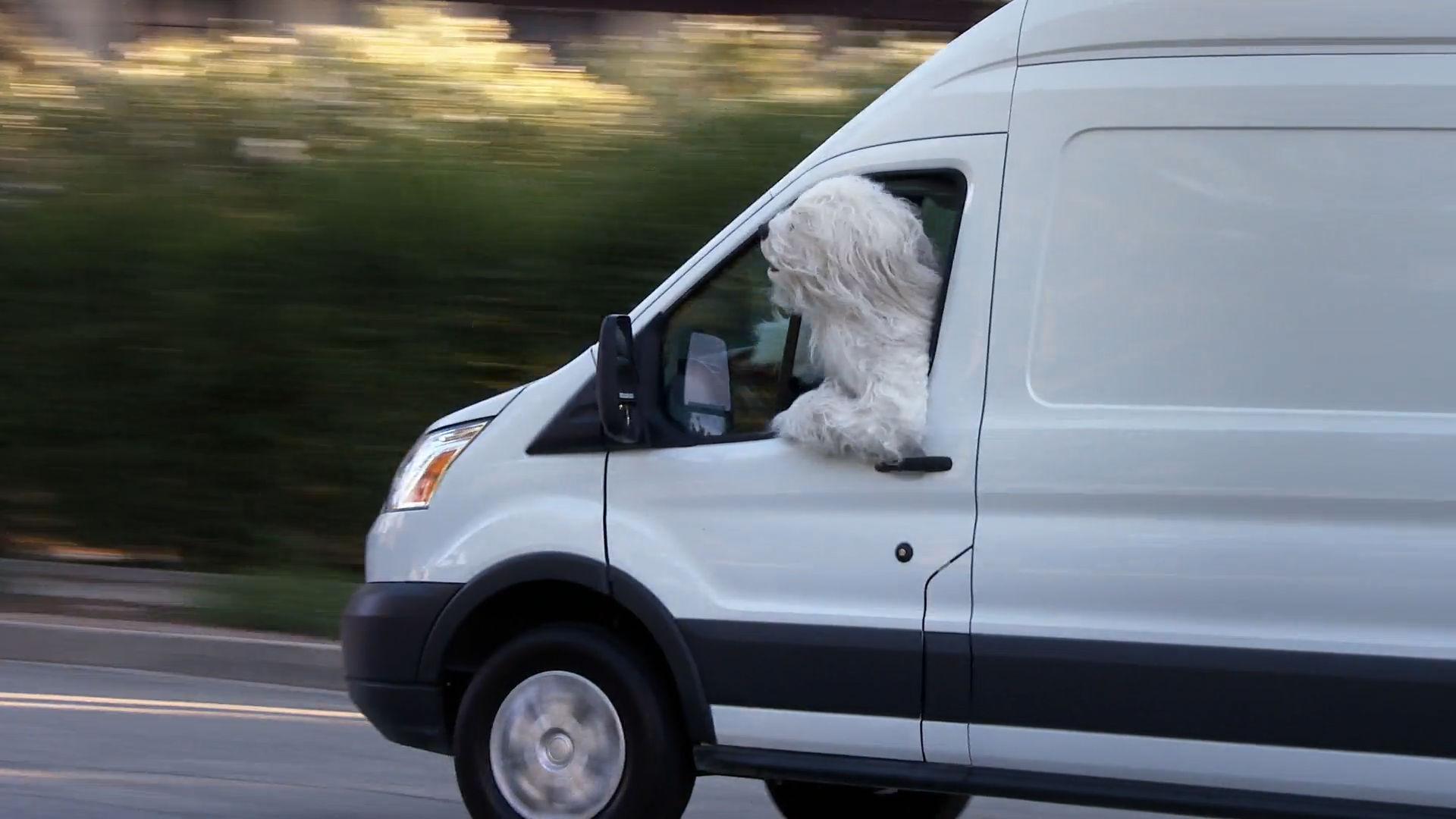Dog Vrooming