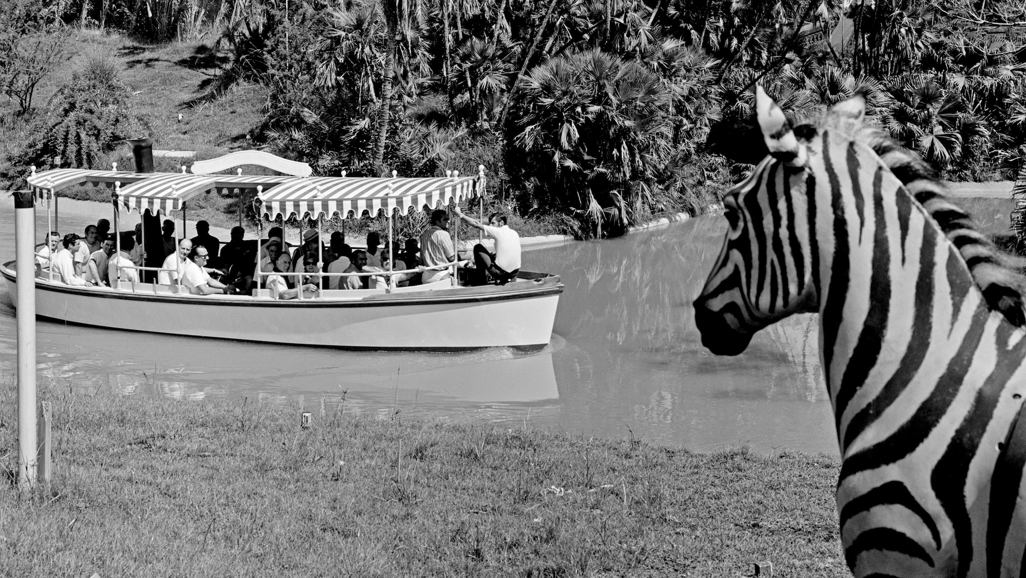 Image of a zebra and a boat from the Jungle Cruise ride.