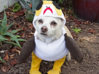 Trick-or-Star Wars Treat: Dress Your Pet as a Porg and More DIY Howl-O-Ween Costumes