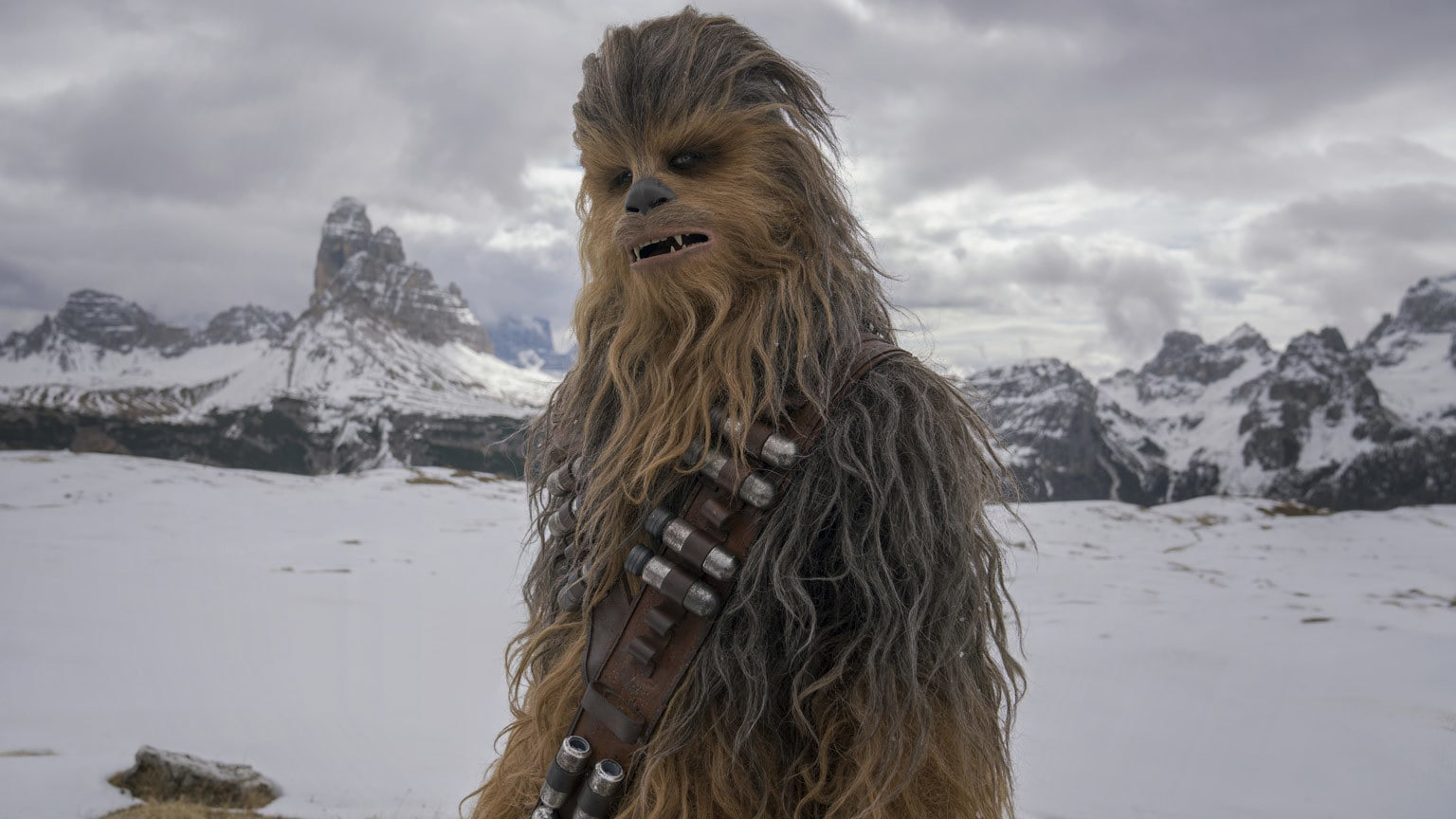 Quiz: What Percent Chewbacca Are You?