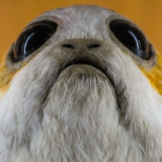 Porgs and Other Props From the Lucasfilm Display Case