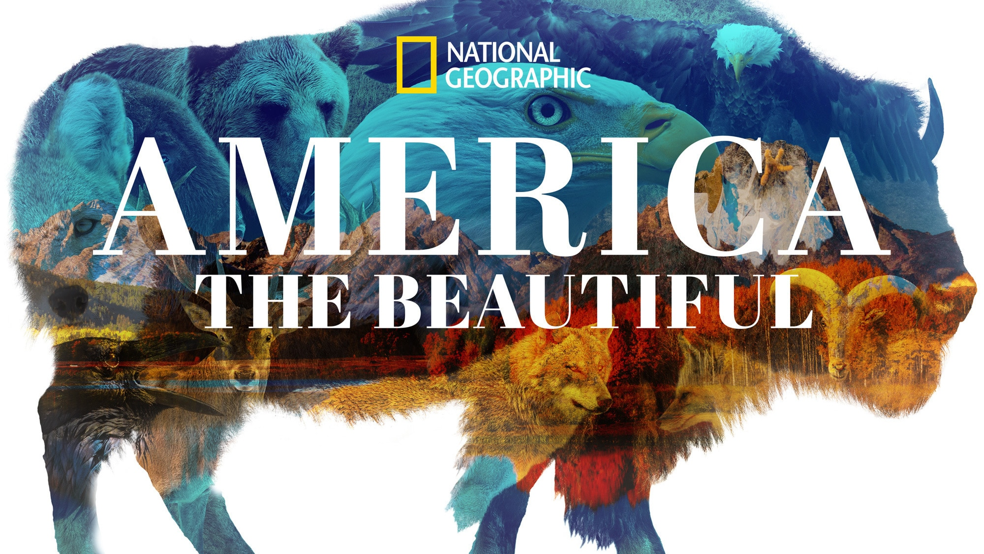 AMERICA THE BEAUTIFUL - It's the land we love and the land we think we know. In AMERICA THE BEAUTIFUL, an ambitious story of North America, you will journey through her visually spectacular regions, led by the iconic species that resonate with us most.   (National Geographic)