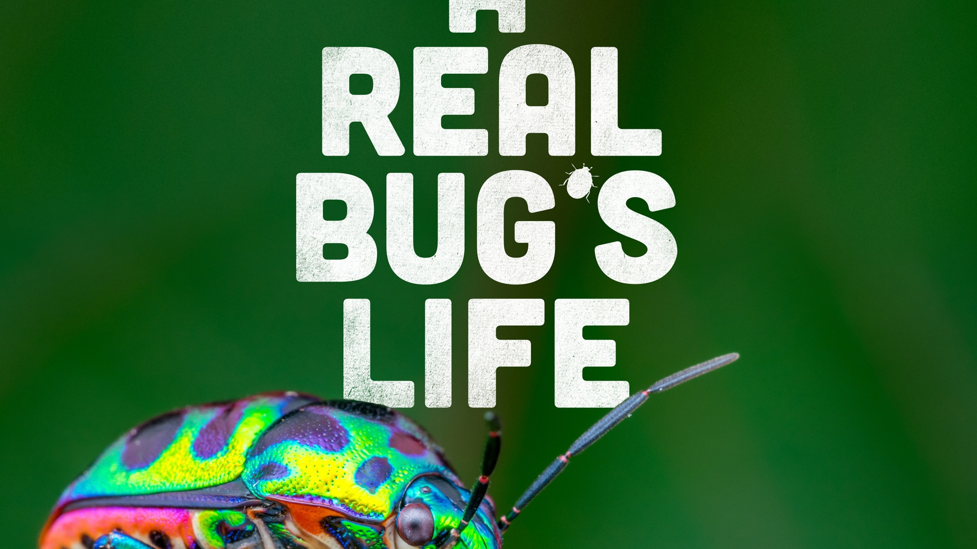 A REAL BUG'S LIFE - In ten spellbinding episodes, A REAL BUG'S LIFE uses advancements in miniaturized technology to take you on adventures into tiny worlds beyond your imagination and show you what life is like on planet Earth from a bug's eye view.   (National Geographic)