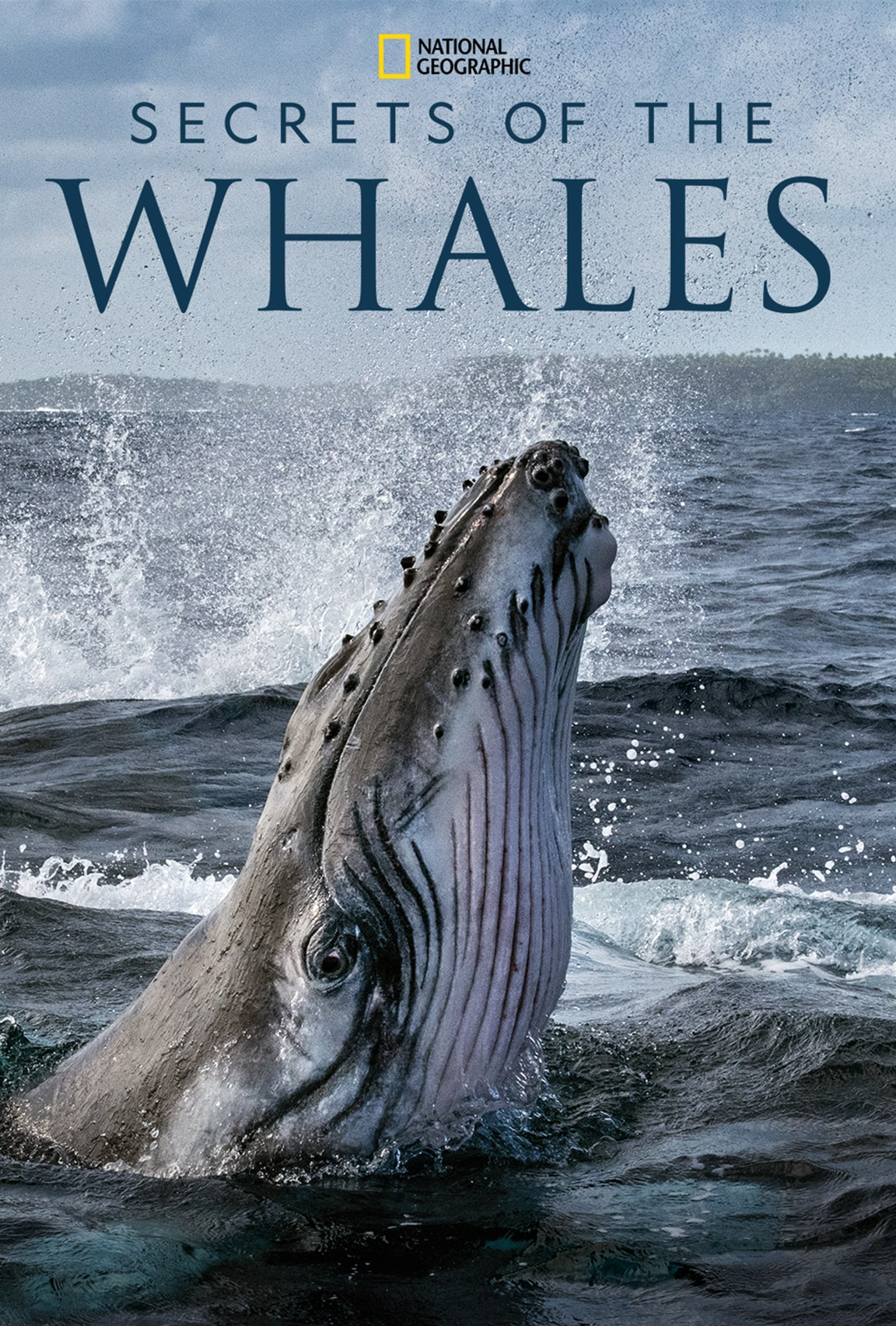 Secrets of the Whales on Disney Plus