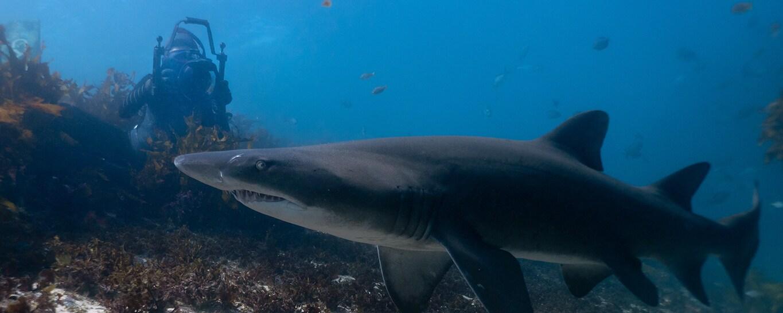 National Geographic photographer and filmmaker Michaela Skovranova underwater photographing a shark