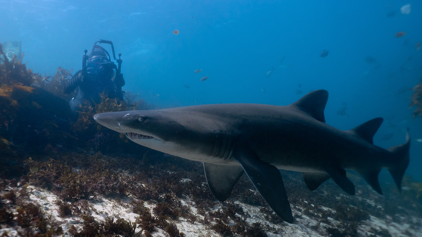 Diving deep into the world of sharks with photographer Michaela Skovranova