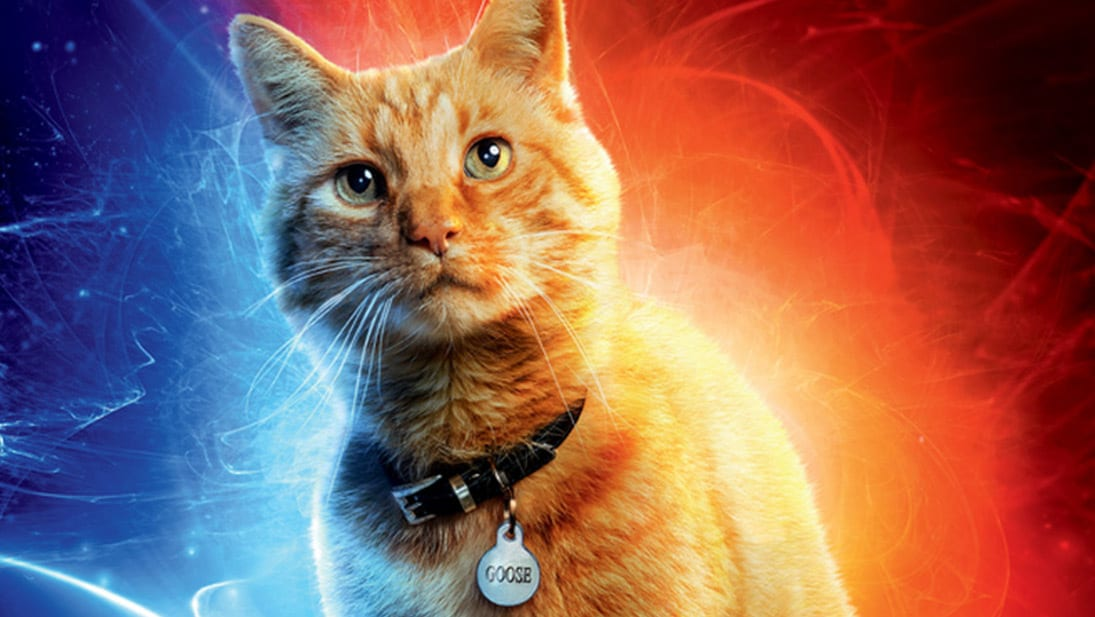 Captain Marvel - Goose The Cat quiz