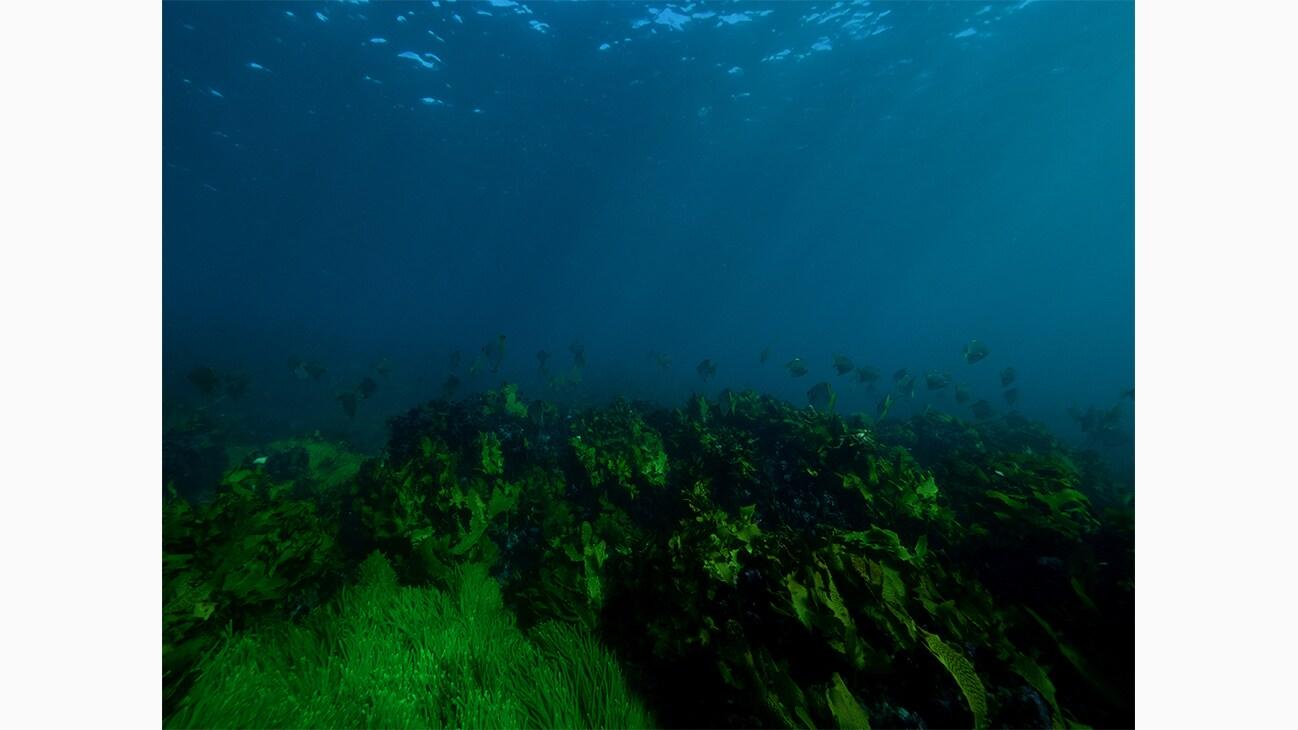 The vibrant life found in Australia's oceans. Photo by Michaela Skovranova