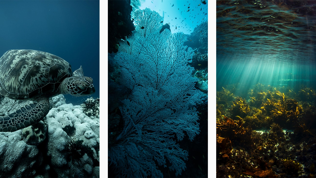 A green turtle, coral and stunning ocean life in Australia. Photos by Michaela Skovranova