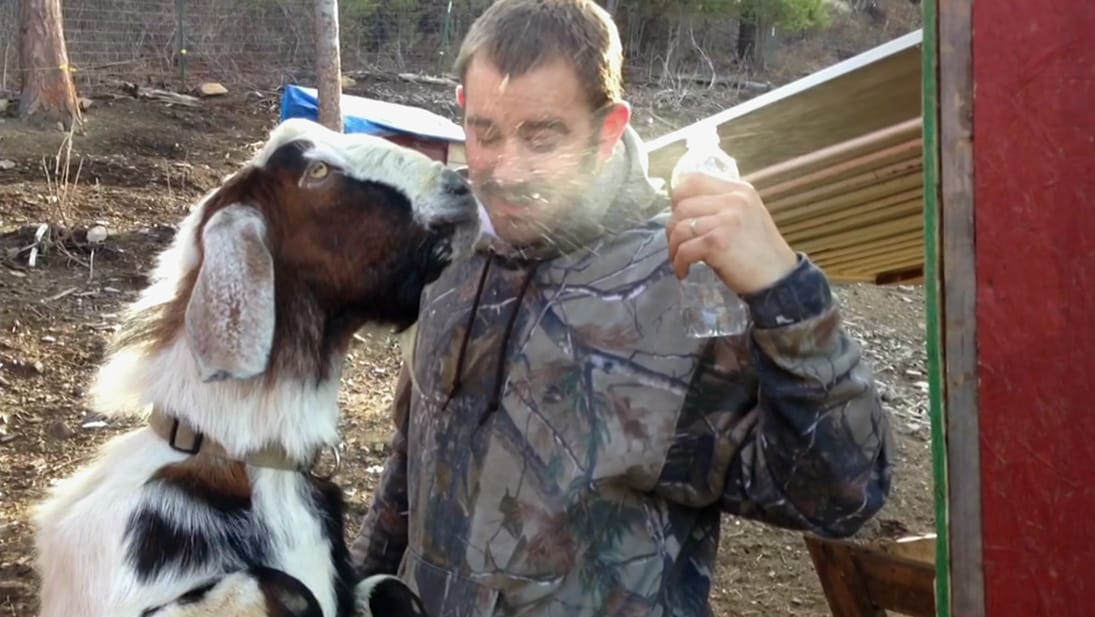 A goat spits water at a man's face from National Geographic's America's Funniest Home Videos: Animal Edition