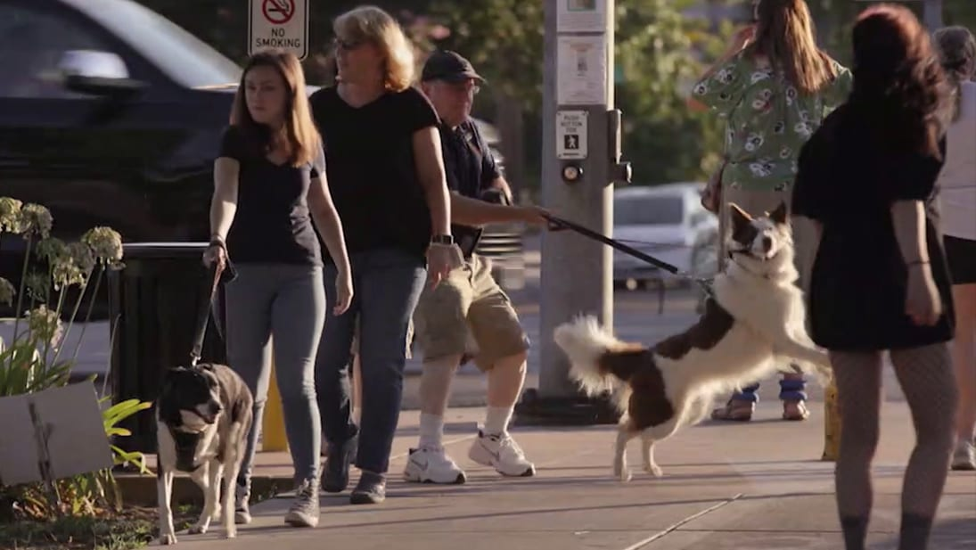 A man walks down a busy street with his dog who is jumping up at strangers from National Geographic's Dog Impossible S2