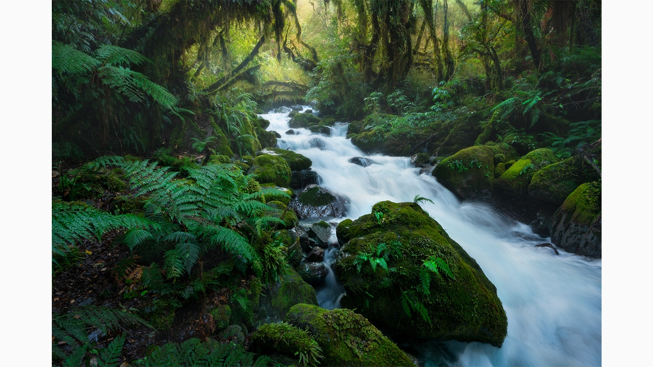 Fiordland forest in New Zealand photo by Will Patino