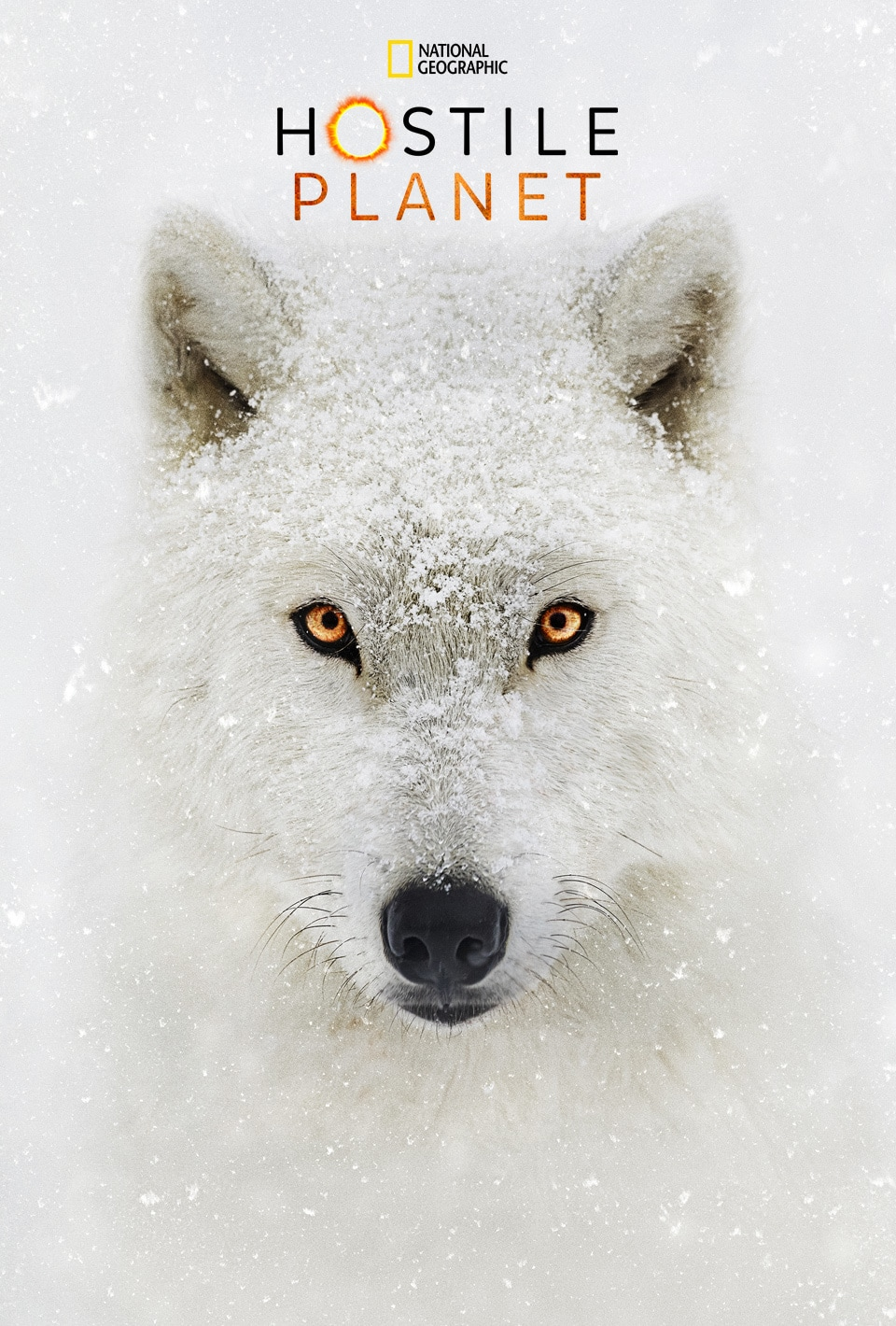 An Arctic Wolf from Hostile Planet with Bear Grylls