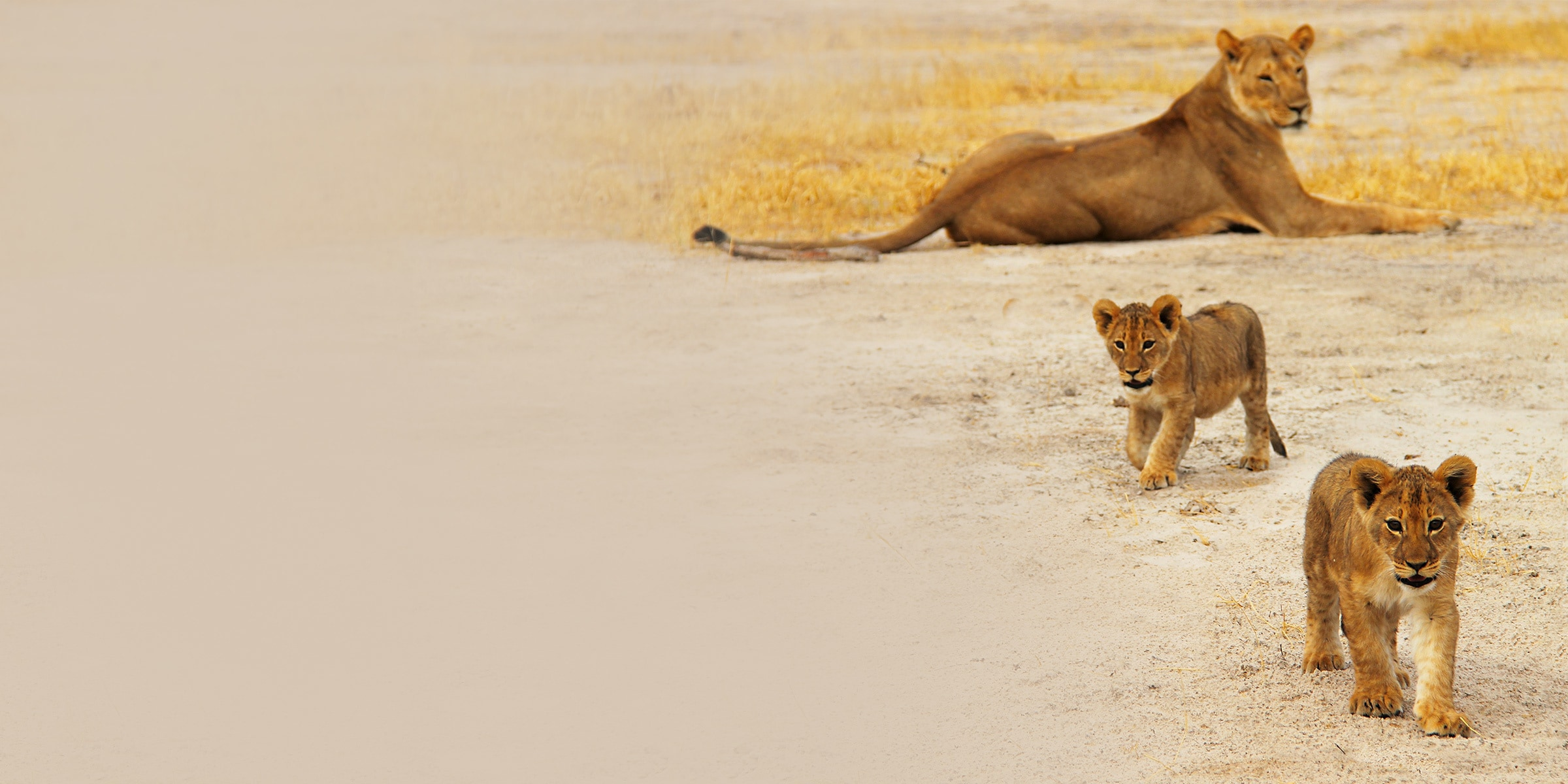 The Lion King Protect The Pride synopsis