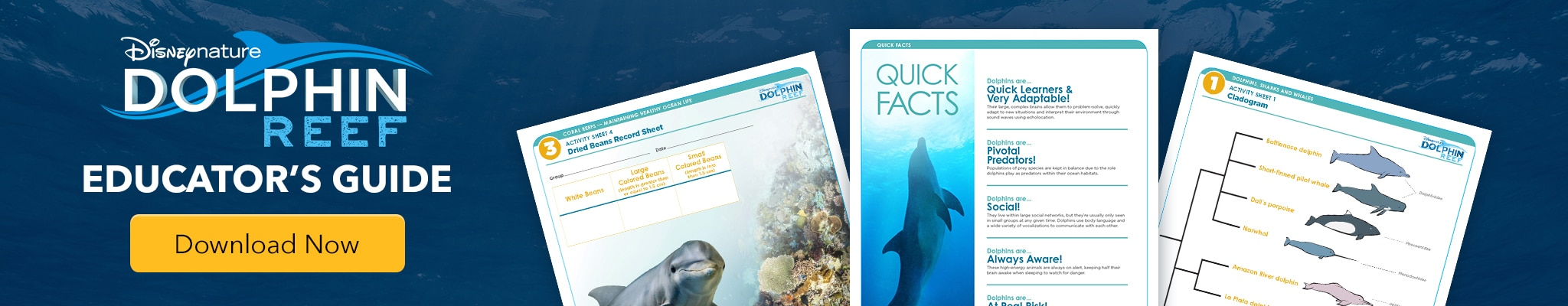 Disneynature Dolphin Reef - Educator's Guide - Download Now