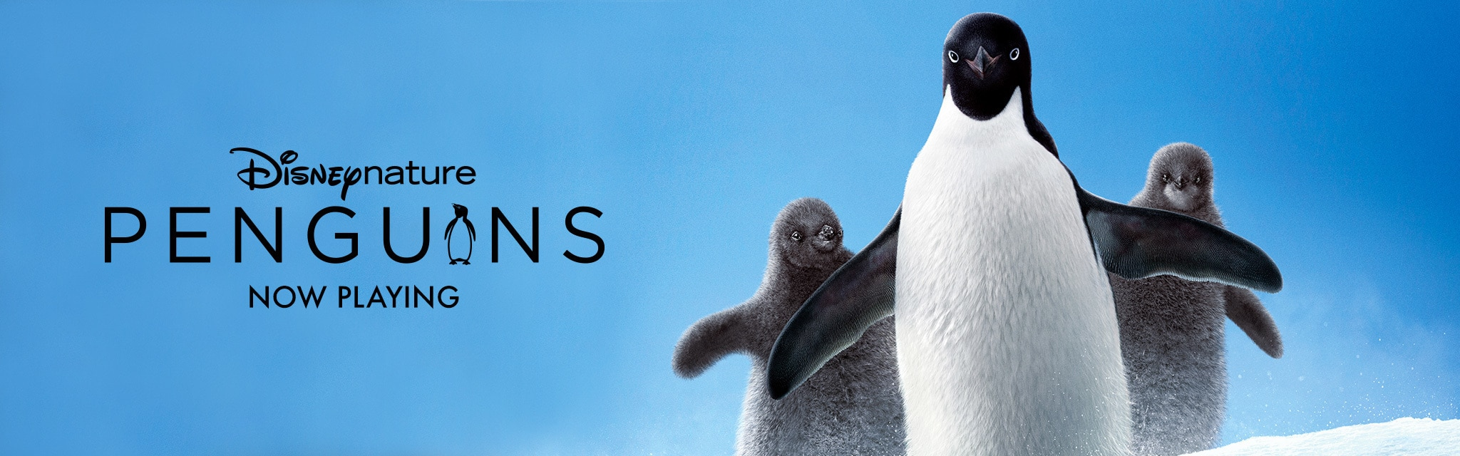 Disneynature Penguins - Now Playing