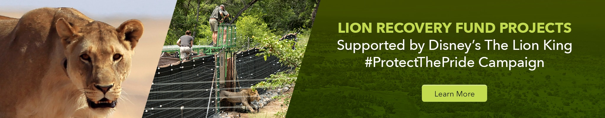 Lion Recovery Fund Projects. Supported by Disney's The Lion King. #ProtectThePride Campaign