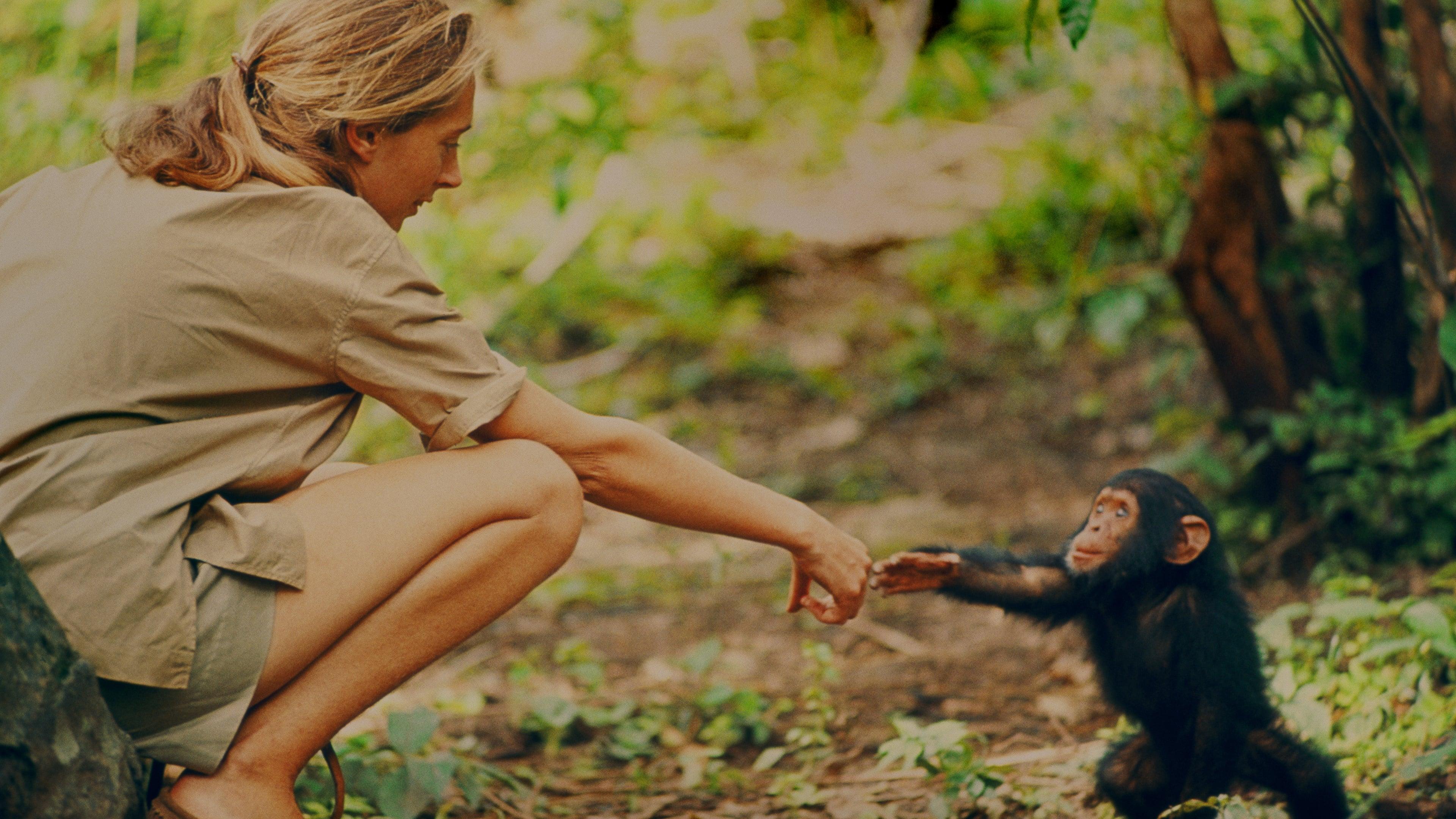 Jane dá a mão a um chimpanzé filhote