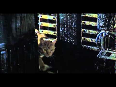 Image of a cat on the ship in the movie Alien
