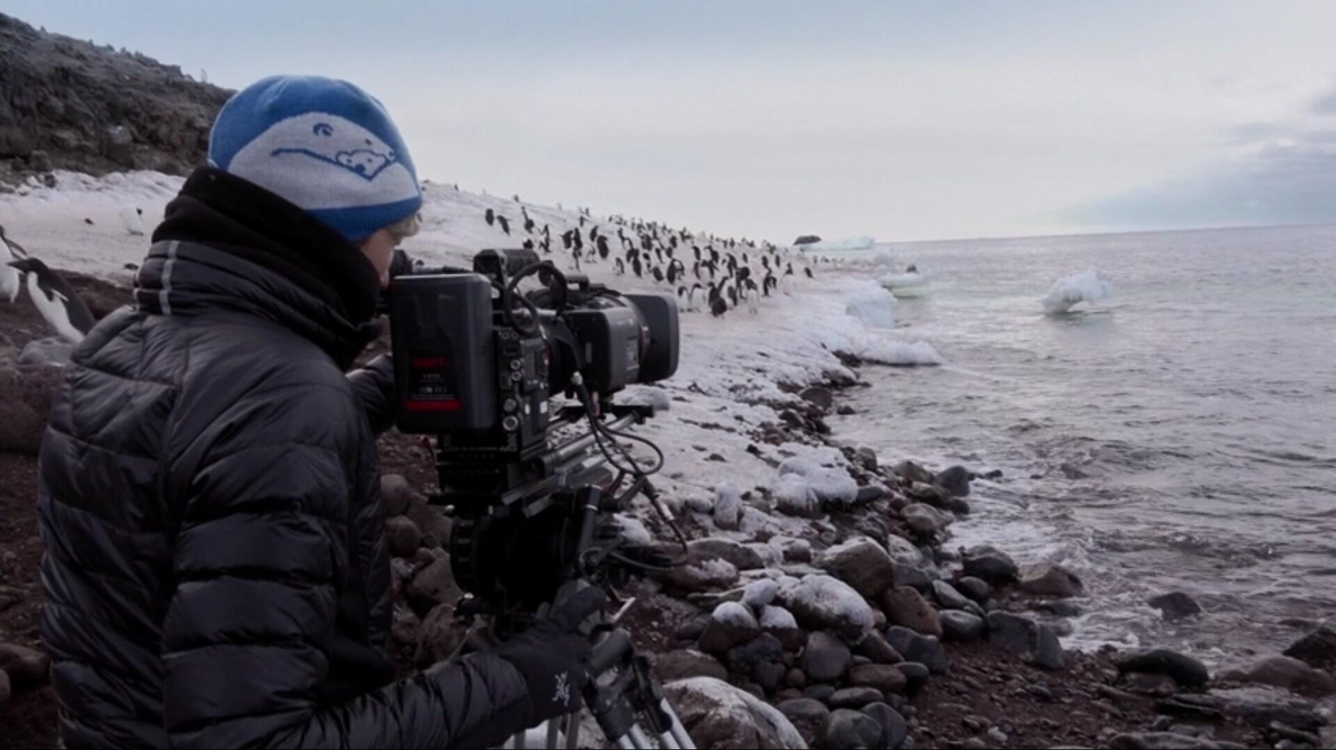 Cinegrafista filma pinguins