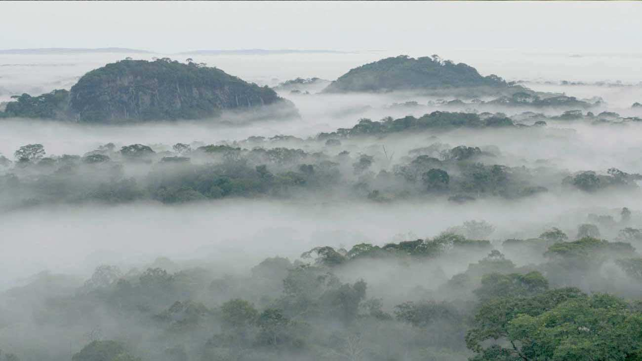 A sky view of clouds above an African forest