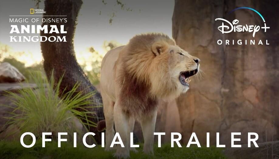 Animal Kingdom Trailer