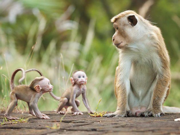 """aus dem Disneynature Film """"Im Reich der Affen"""""""
