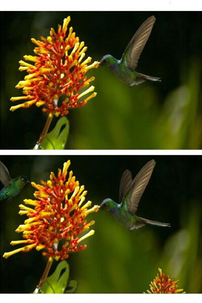 Les 7 Différences : Pollen
