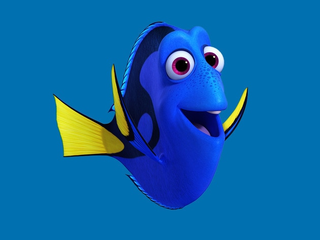 Dory is a bright blue tang with a sunny personality. She suffers from short-term memory loss, whi...