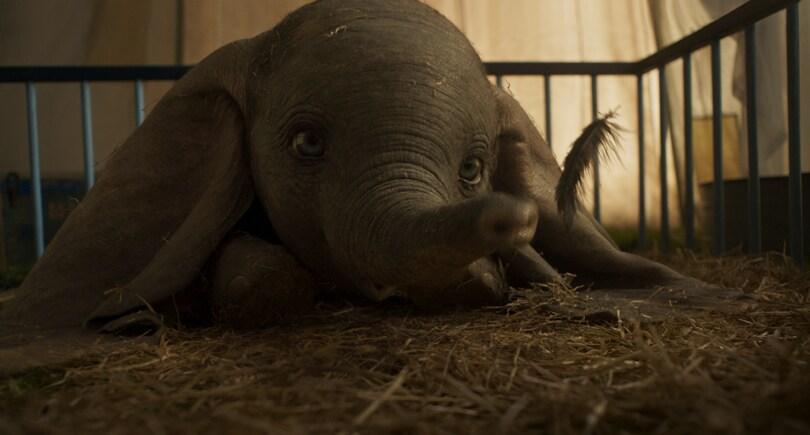 Dumbo | Tariler02