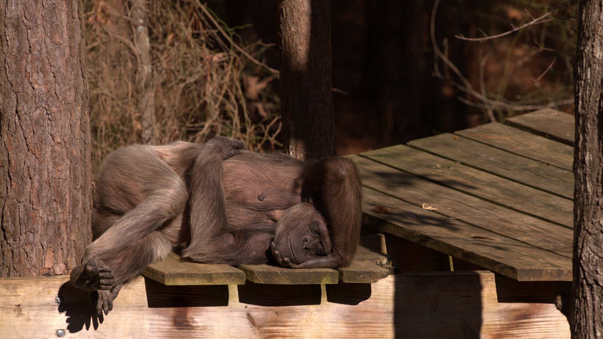 Flora sleeping on a platform in the summer heat. Sara Soda's group. (National Geographic/Jack Chapman)