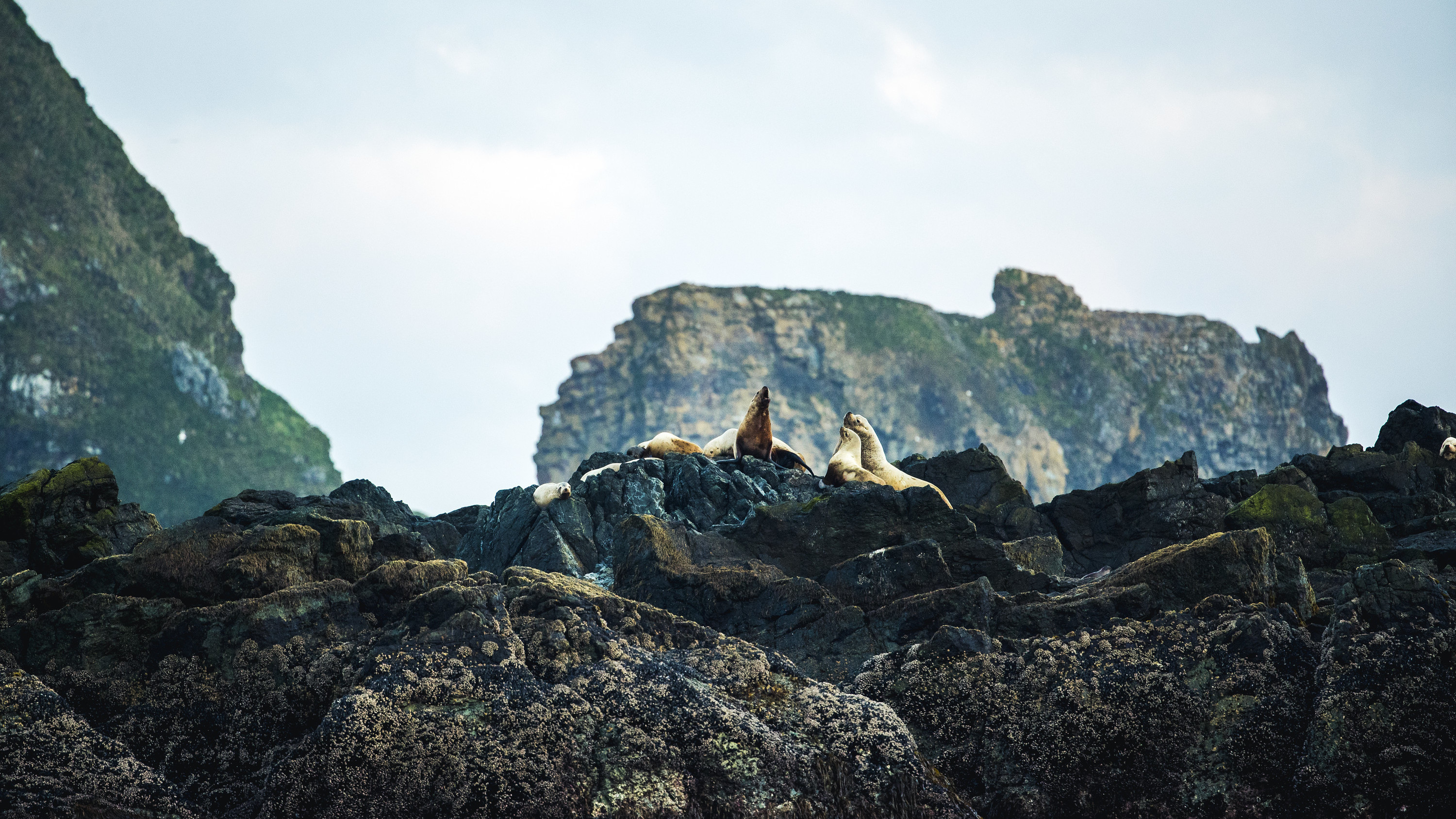 A small group of sea lions on rocky outcrop. (National Geographic for Disney+/Ryan Tidman)