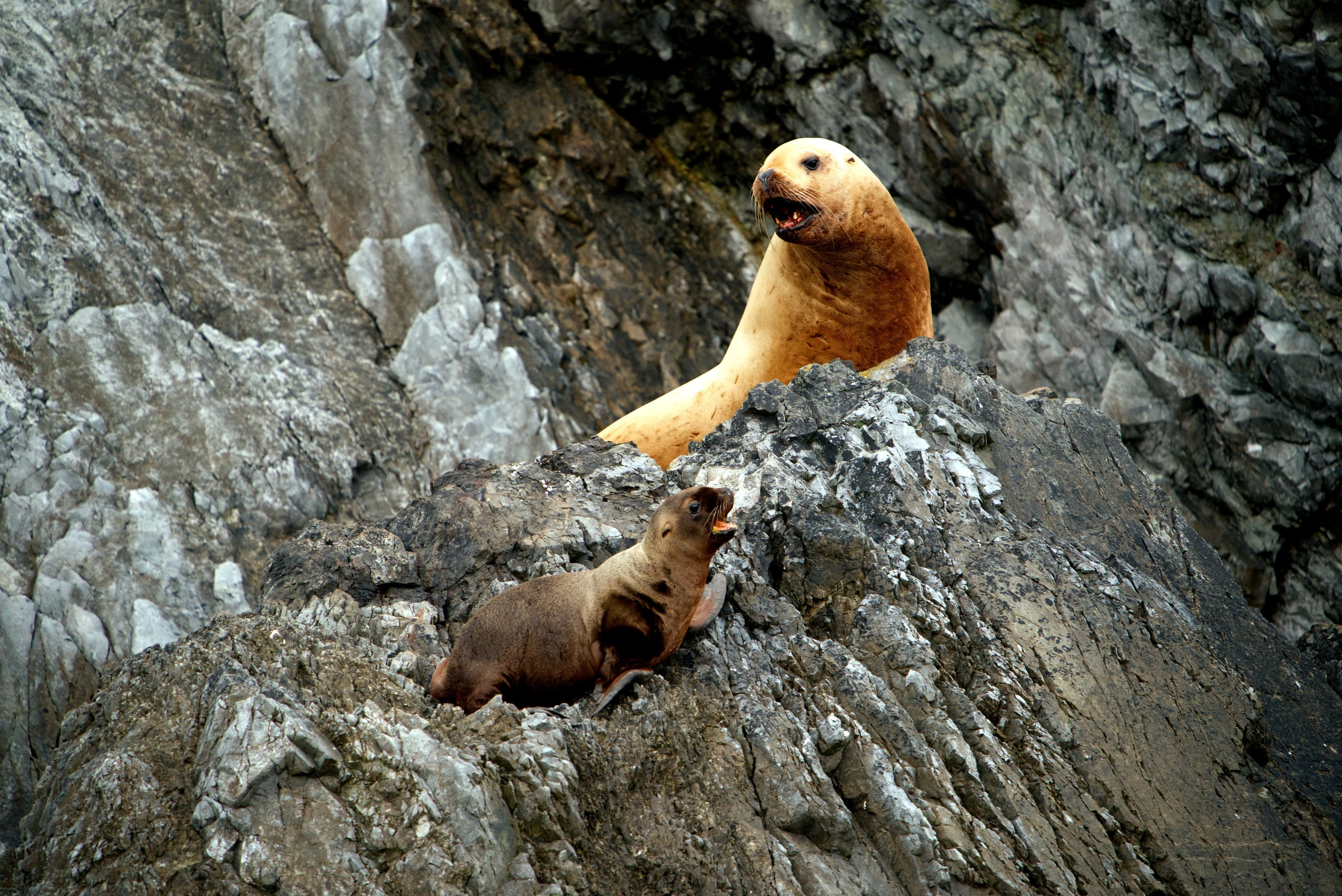 Star and sea lion pup Luna on the rocks of Triangle Island. (National Geographic for Disney+/Ryan Tidman)