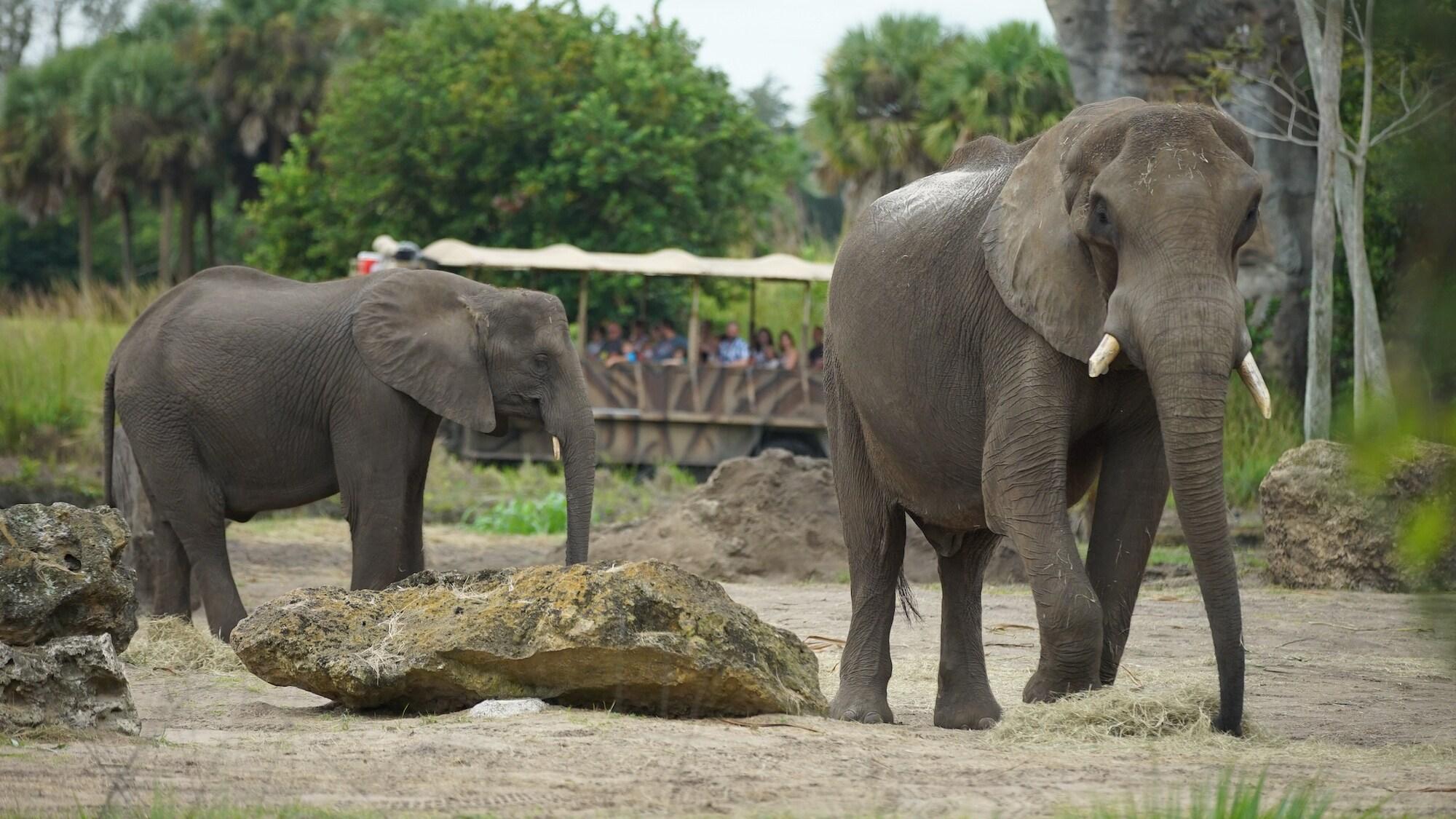African elephants Maclean, Mac for short, and Kianga. (Disney)