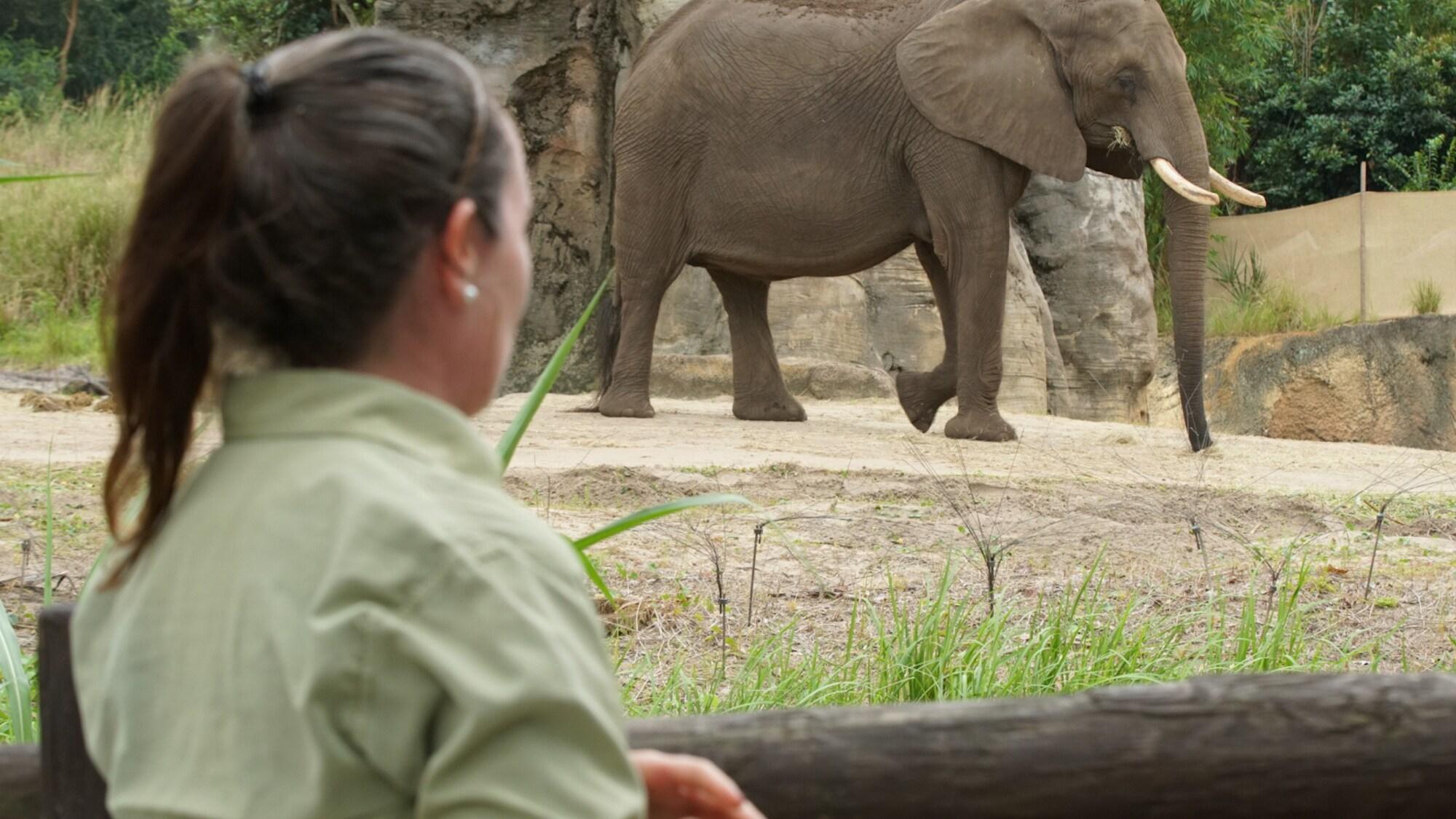Keeper Elizabeth Dolan observes an African Elephant. (Disney)