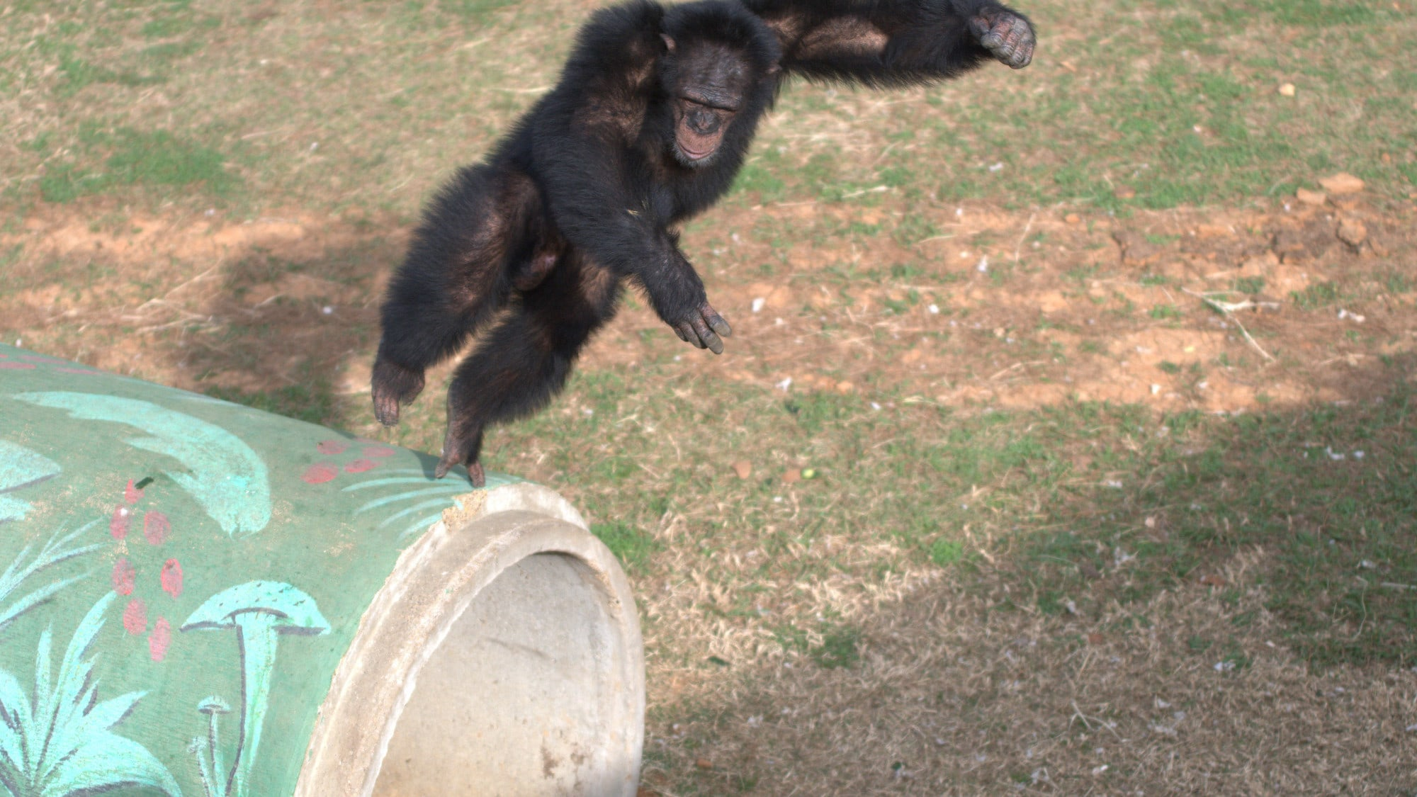 Jimmy Dean in mid jump off a painted concrete cylinder. Jimmy Dean is one of the adolescent males in Sara Soda's Group. (Nick Chapoy)