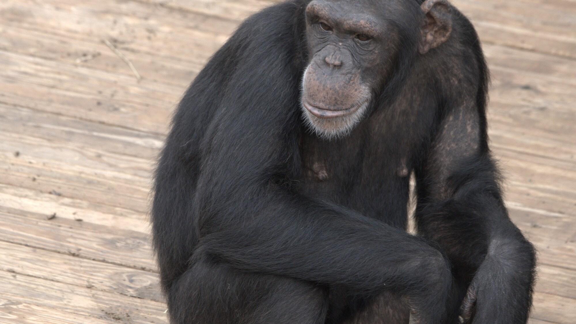 Portrait of Quilla on wooden platform, Slim's group. (National Geographic/Virginia Quinn)