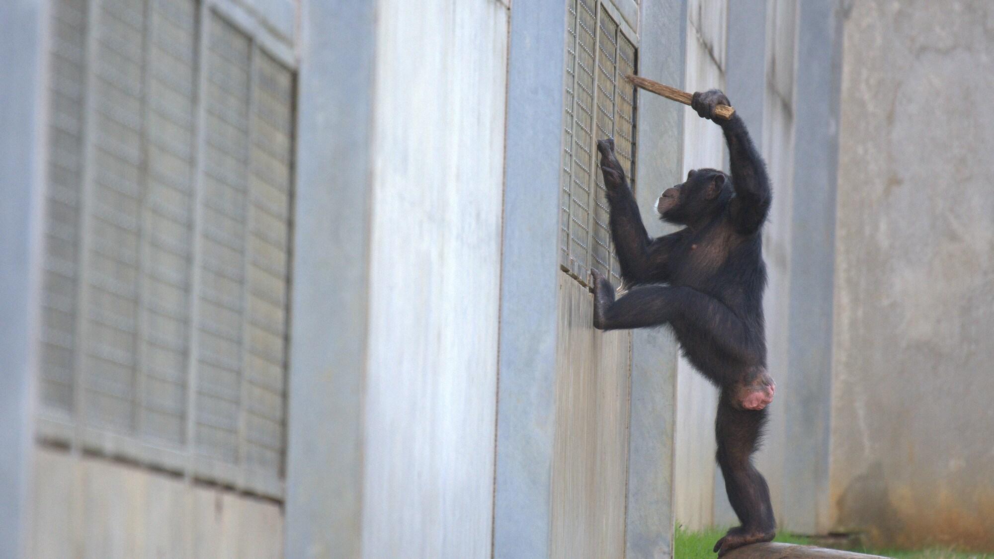 Arden poking stick through mesh. Sara Soda's group. (National Geographic/Virginia Quinn)