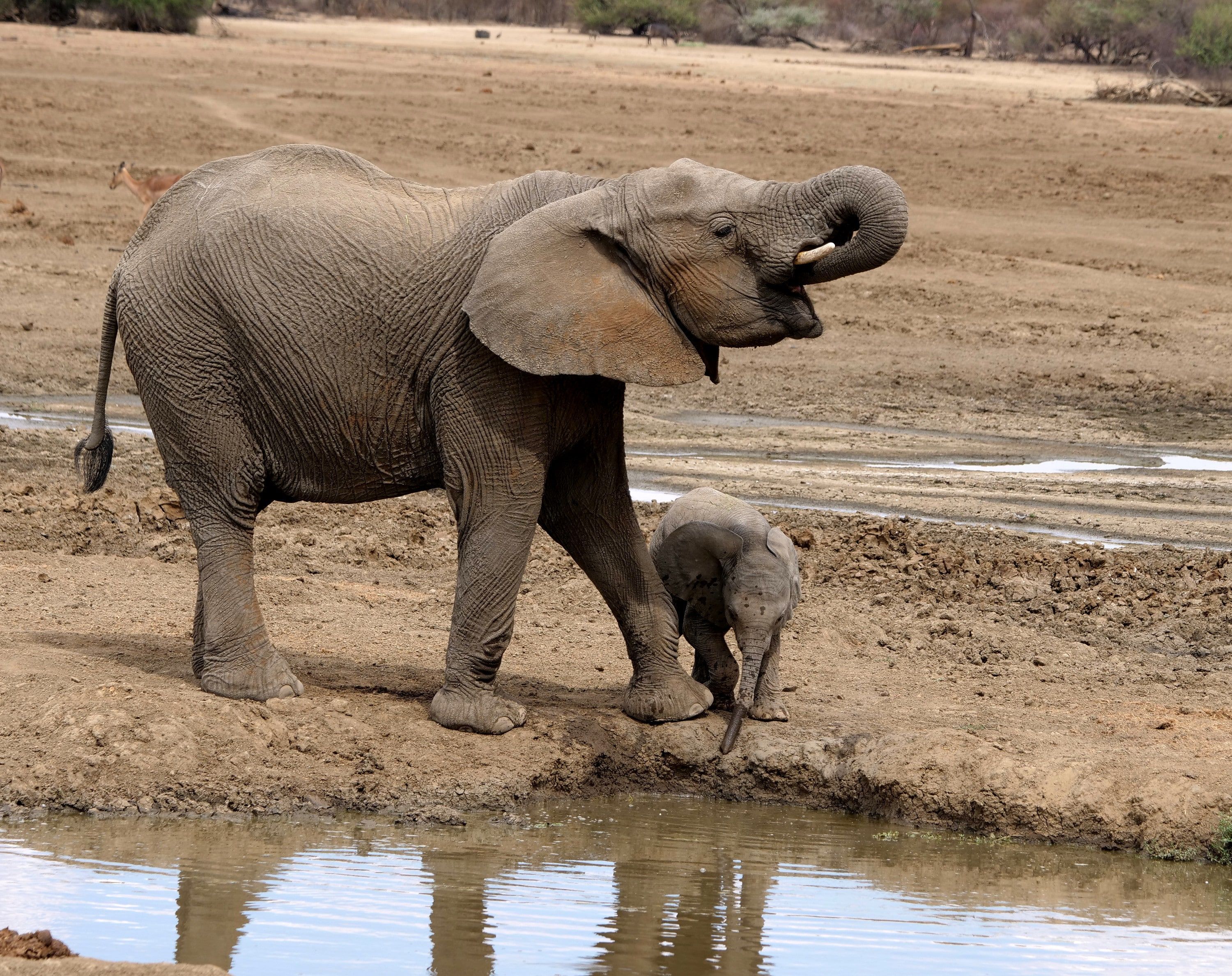 Aria and Thandi drinking. (National Geographic for Disney+/Melanie Gerry)