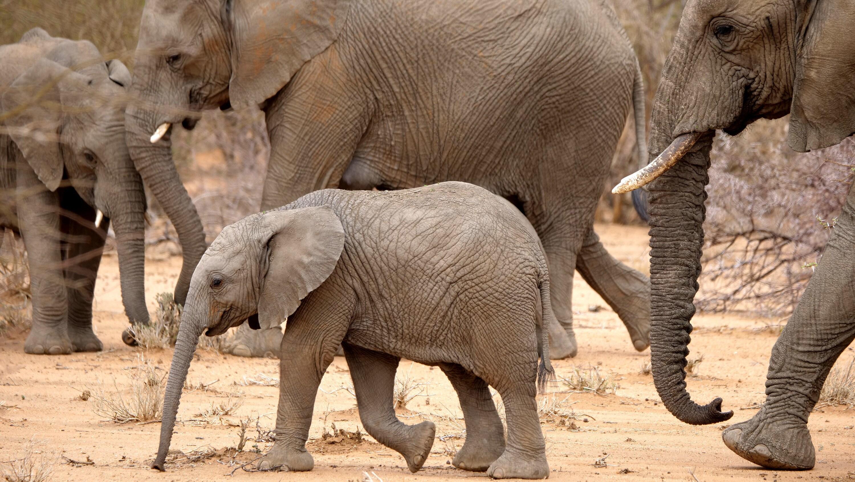Max walks through the dry terrain. (National Geographic for Disney+/Melanie Gerry)
