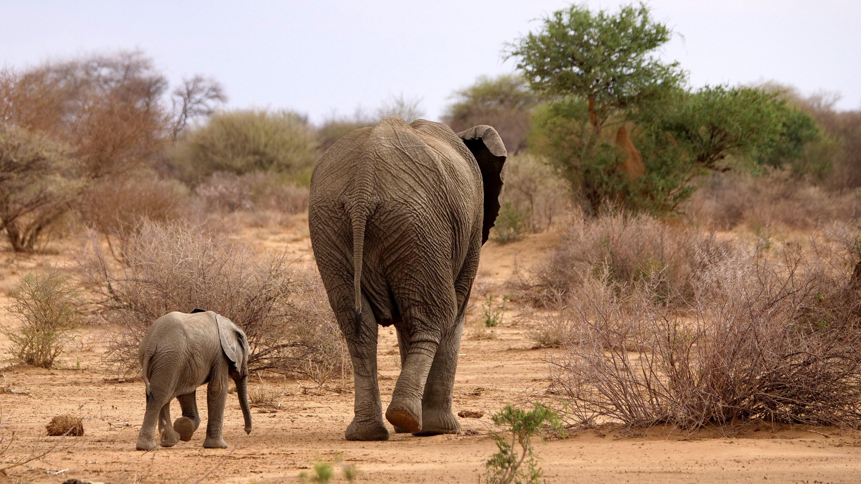 Aria walks behind Thandi. (National Geographic for Disney+/Melanie Gerry