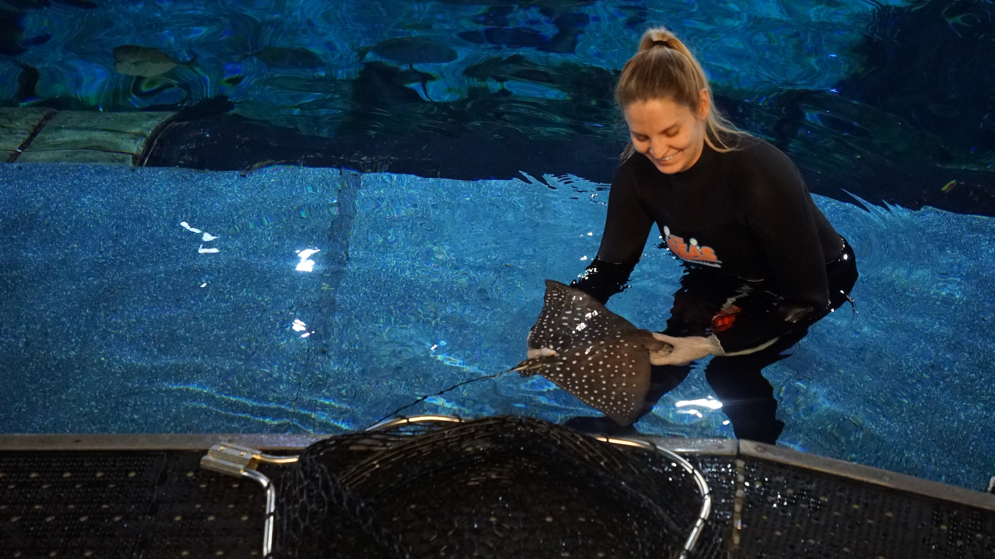 The newly born Spotted Eagle Ray, as he recovers from anesthesia. (Disney)