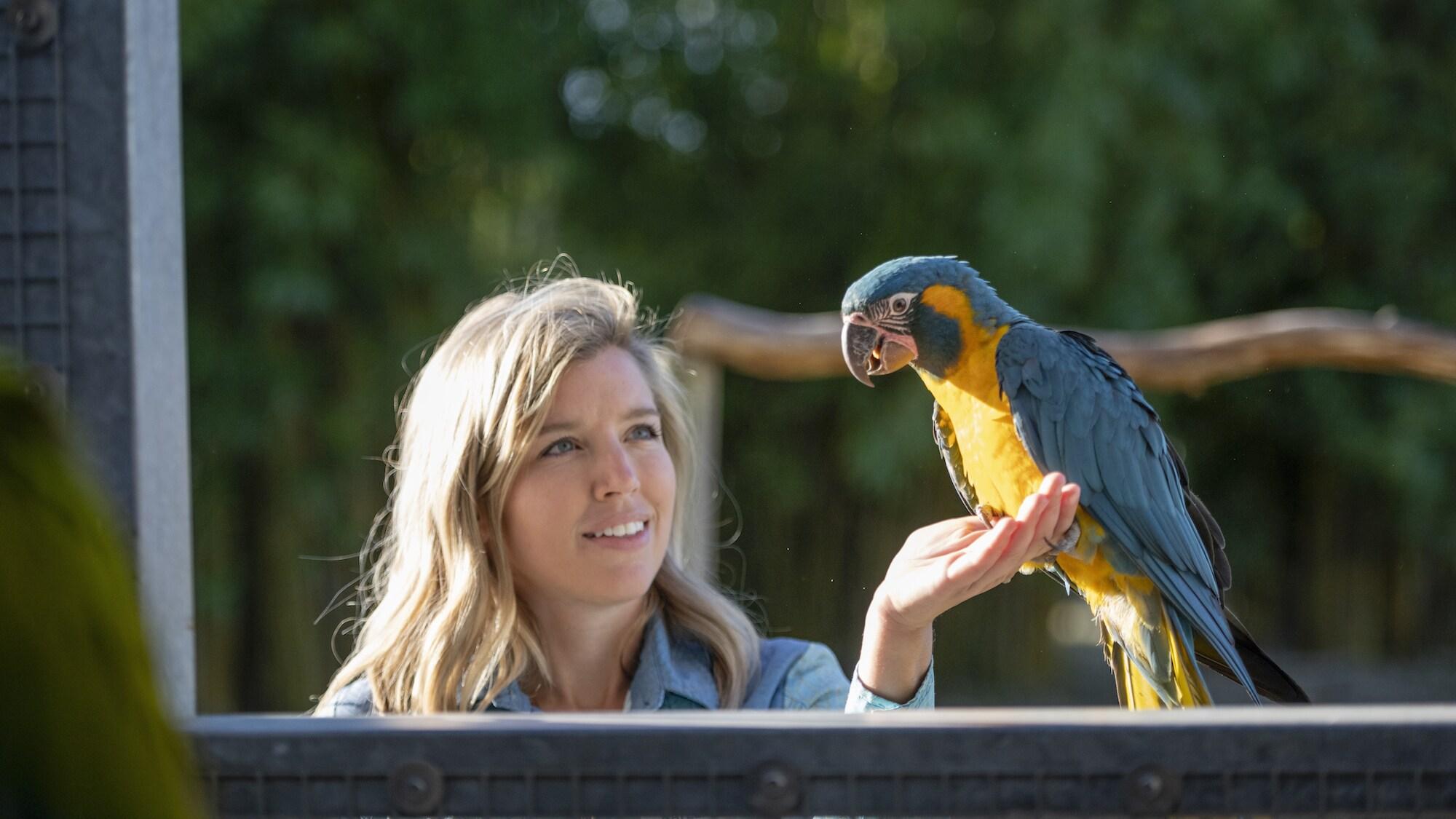 Primrose the Blue Throated Macaw. (Charlene Guilliams/Disney)