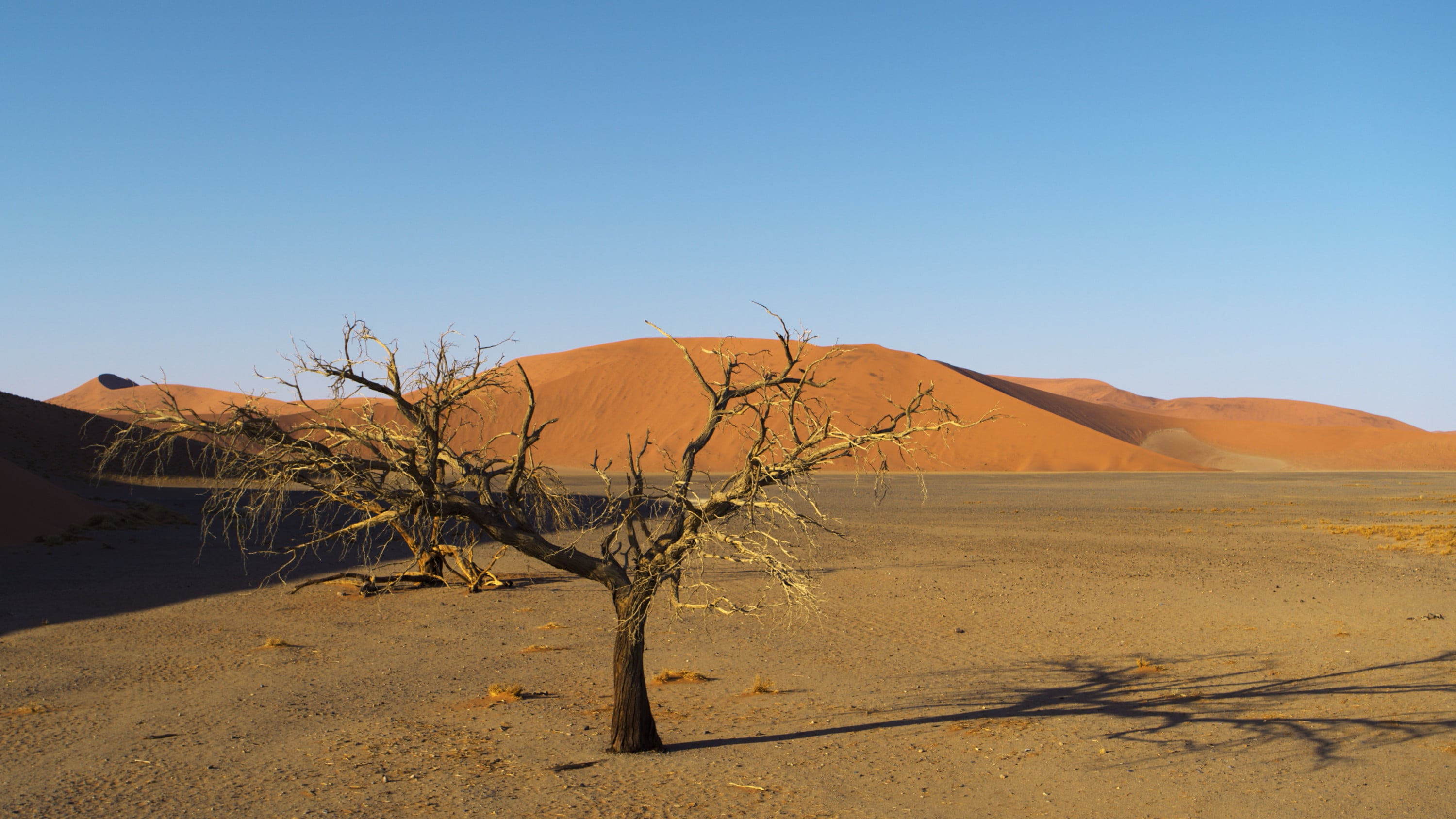 Camel thorn trees against red dunes in Namib-Naukluft Park. (National Geographic for Disney+)